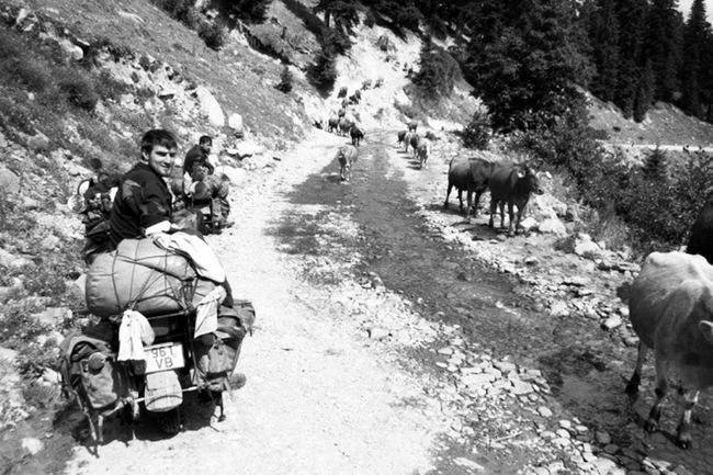 """Kalnų kelyje ekspediciją sustabdė """"kamštis"""" – karvių banda"""
