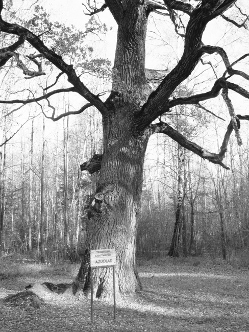 Teodoro Grothuso ąžuolas – vienas žymiausių mūsų krašto gamtos paminklų.